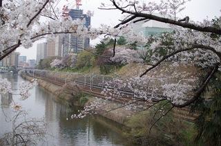 市ヶ谷駅 桜